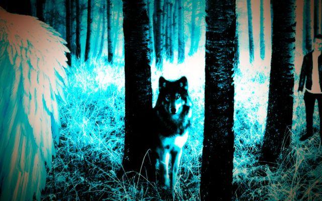 Star Series Wolf Banner 4